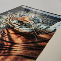 Gloss Laminated Foamex Posters